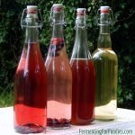 How to make kombucha - a probiotic soda pop