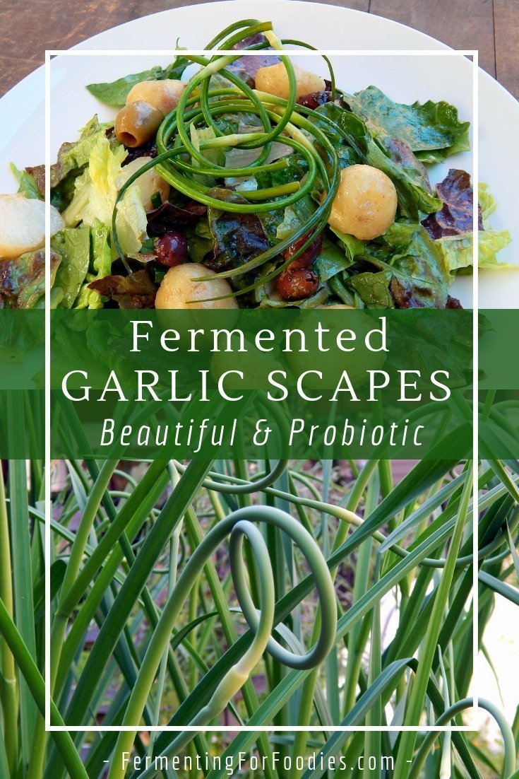 Simple fermented garlic scape pickles, perfect for salad