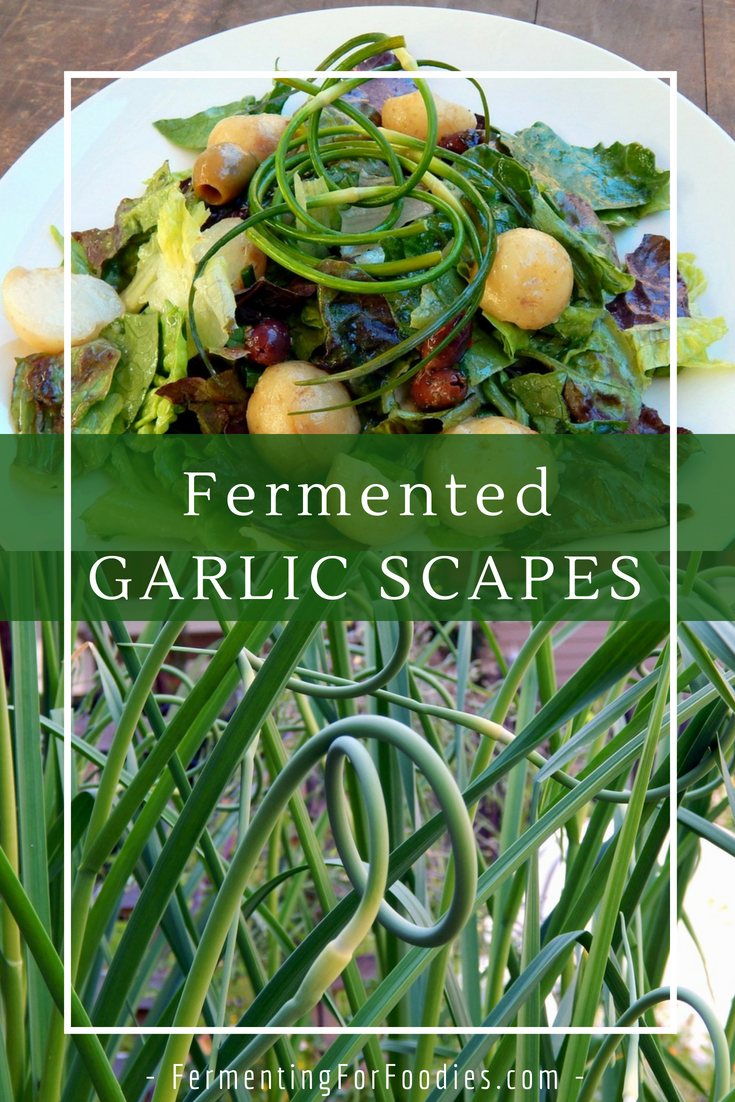 Garlic scapes in the garden - Edible and delicious, like a green bean