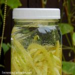 Delicious fermented green bean pickles
