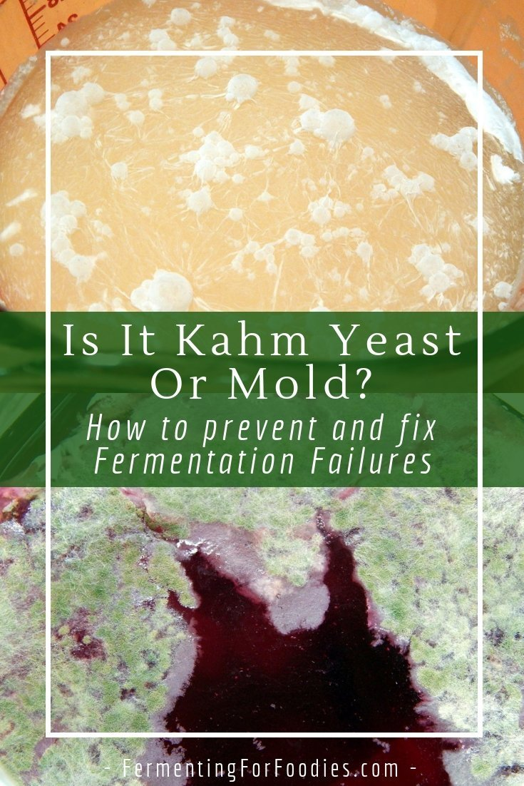 Kahm yeast grows on the top of a ferment and it isn't a big problem