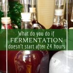 What should you do if there is no fermentation after 24 hours.