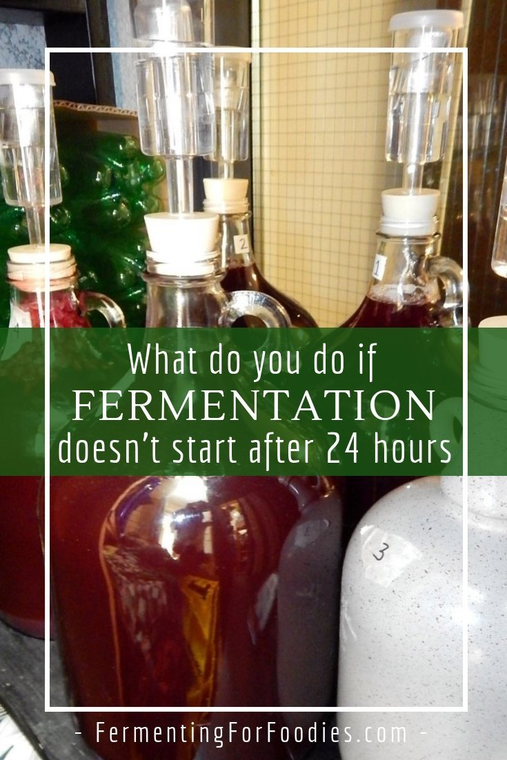 Why fermentation didn't start and what you need to do about it.