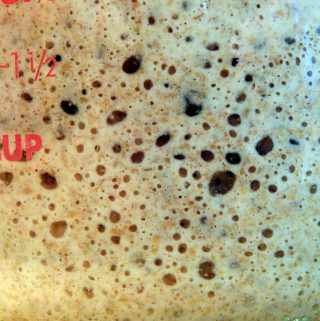 Sourdough starter bubbles viewed from the side
