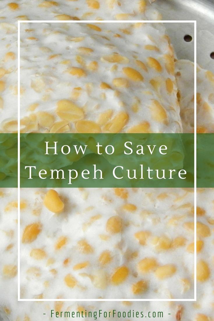 Save tempeh mold spores as a culture for future tempeh batches.