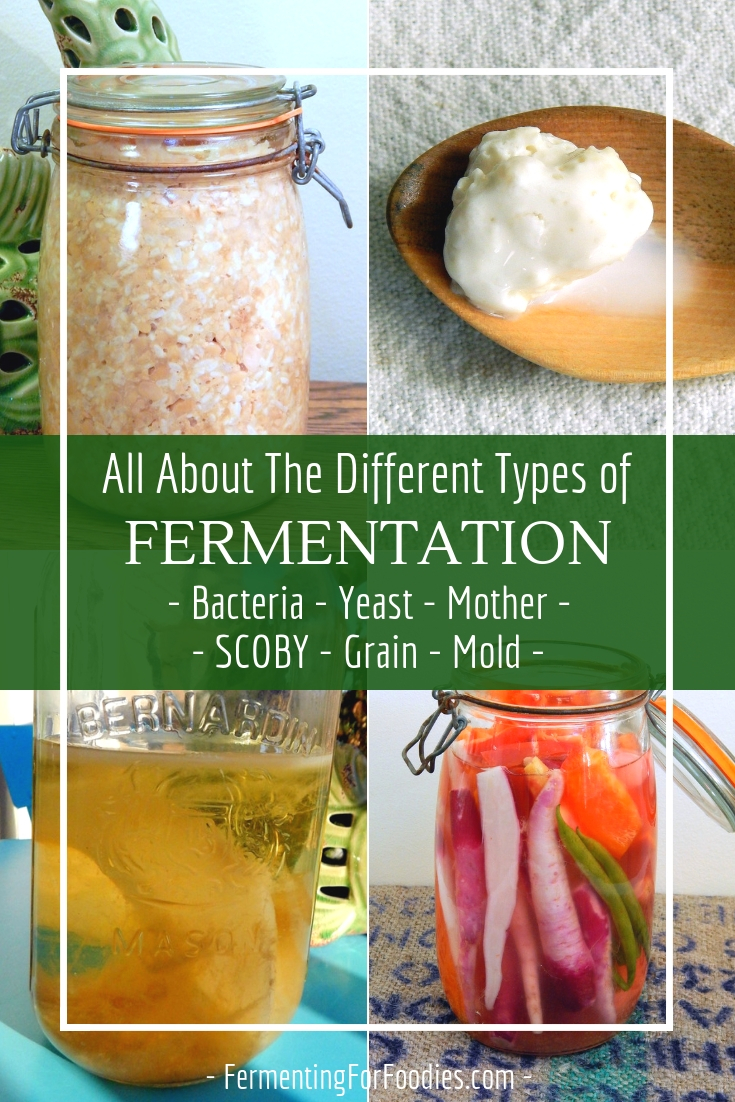 Types of fermentation - scoby, mother, grain , mold, yeast and bacteria