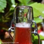 Probiotic fermented soda pop - kombucha, kefir, ginger bug, jun and more