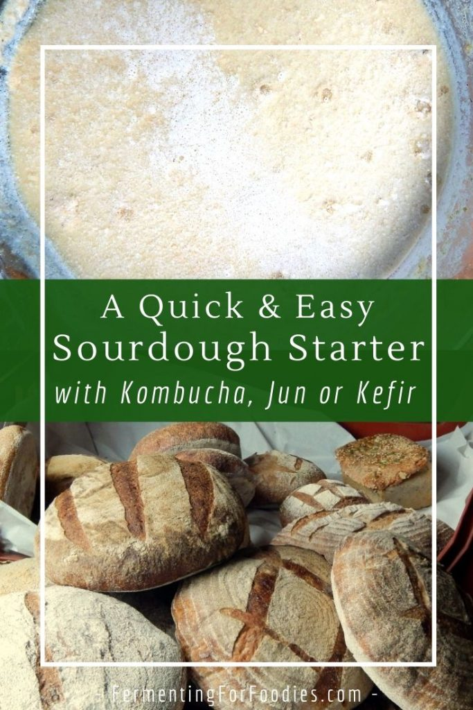 How to make an active sourdough starter in less than 24 hours. Perfect for gluten-free or regular bread