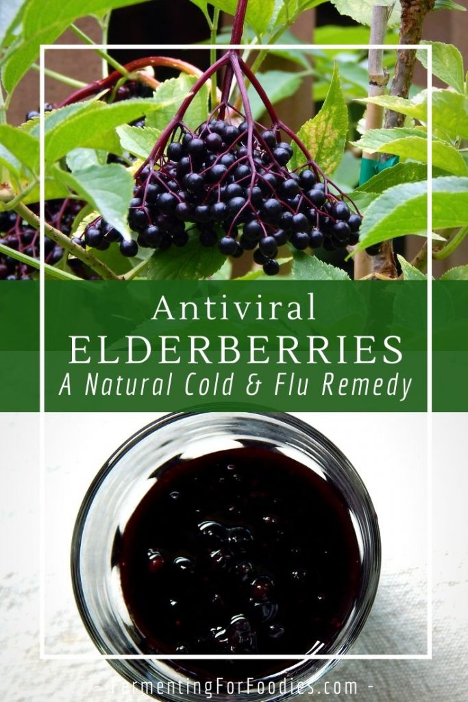 How to make a herbal remedy out of antiviral elderberries