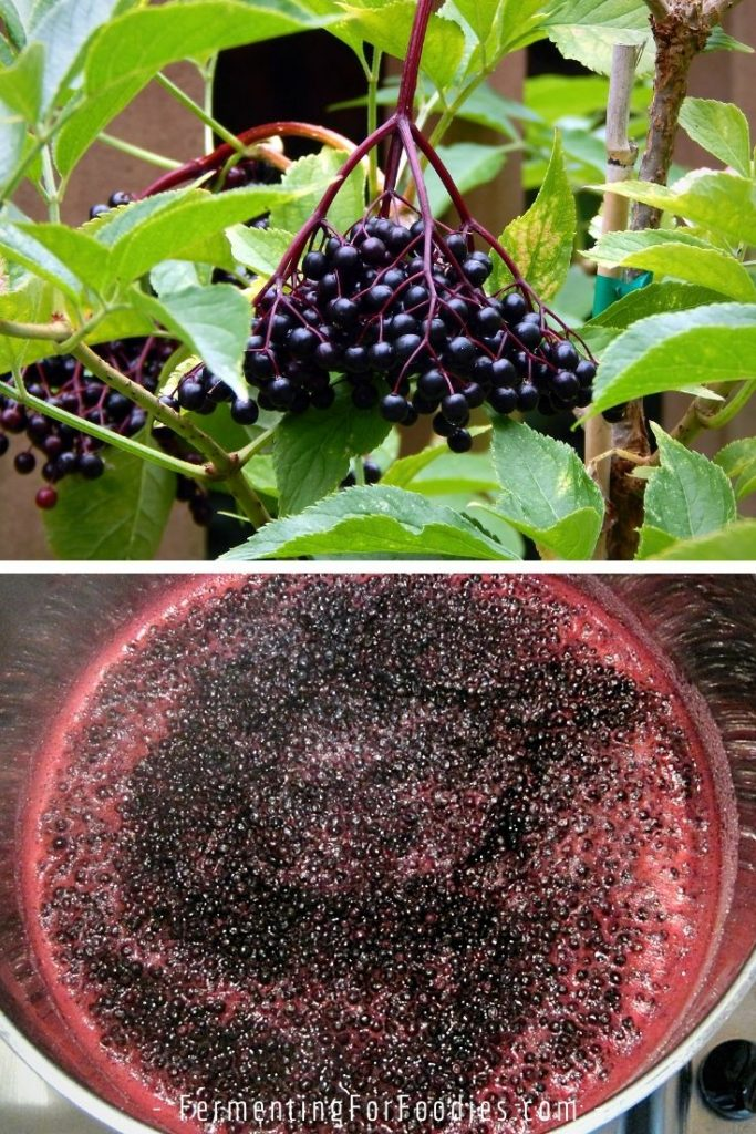 How to make elderberry sauce with fresh or dried elderberries