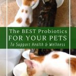 The best probiotics for pets to support their health and wellness. Including what type of fermented foods they can eat.